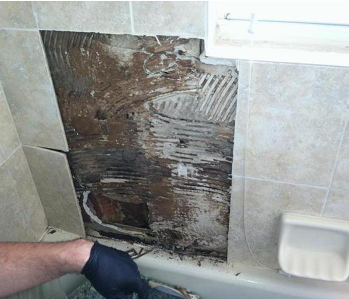 Mold Damaged Wall in an Edgewood Bath