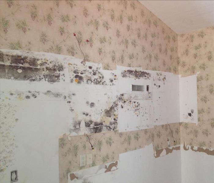 Wayzata Mold Damage in Kitchen