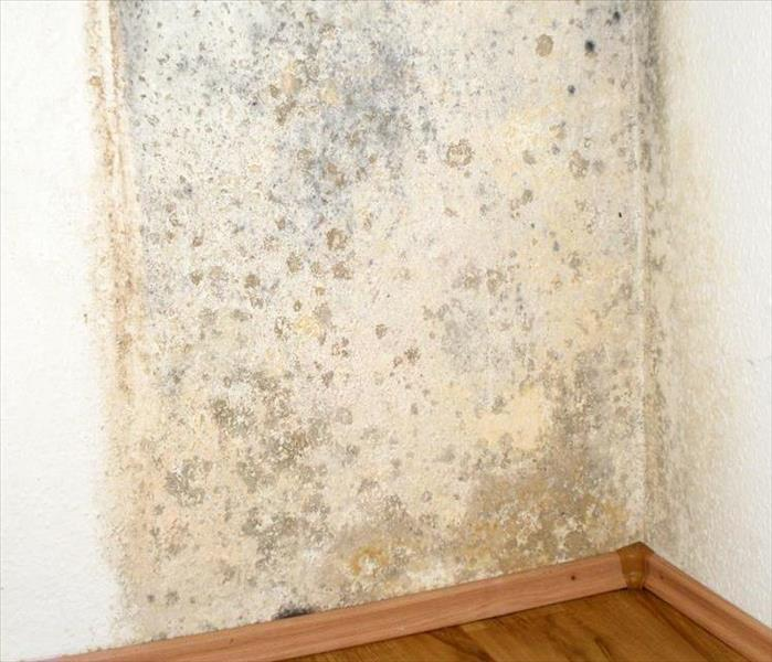 Mold on a Glen Lake Wall