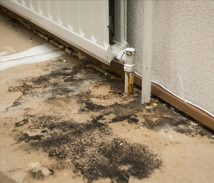 Mold Remediation Mold Damage Experts in Minneapolis Talk About Inhibiting Mold Patches from Spreading
