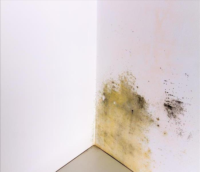 Mold Remediation What Is Mold And How Can Homeowners In Oak Knoll Decrease Exposure?